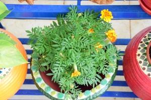 DIY Mosaic Planters