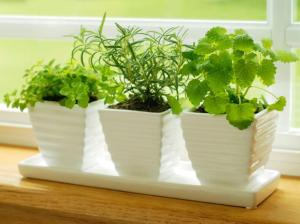 iStock-4787386_herbs-on-kitchen-windowsill_s4x3.jpg.rend.hgtvcom.616.462